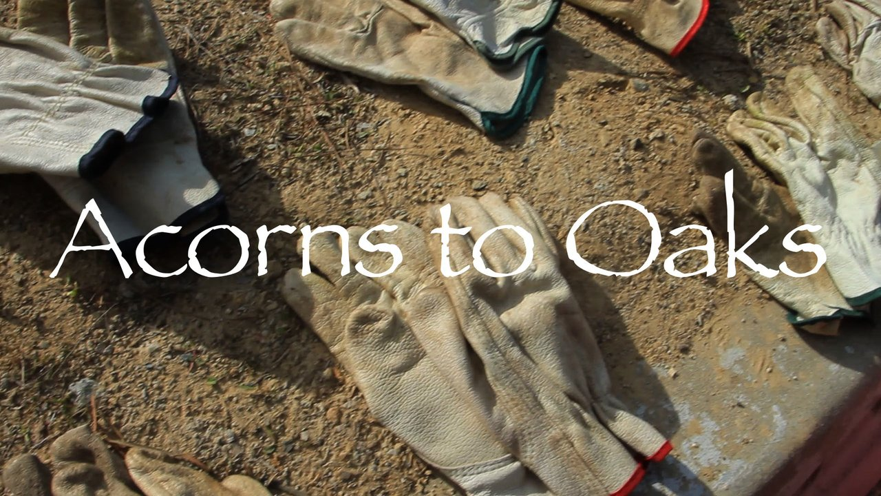 Acorns to Oaks - Friends of Rose Canyon