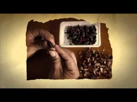 Buscando el Cacao de Oro del Perú
