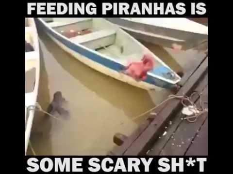 FEEDING PIRANHAS IS SOME SCARY SH*T