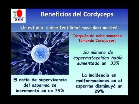 Cordyceps DXN