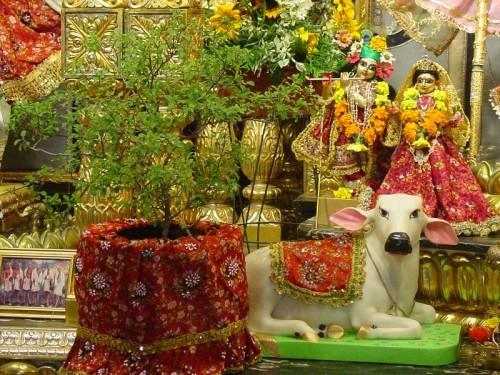 Tulasi Aarti - ISKCON Desire Tree | IDT