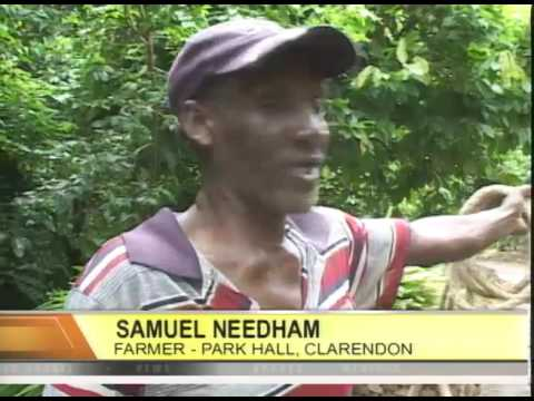 Regulating CCTV in Public Spaces - TVJ Midday News - May 26 2017