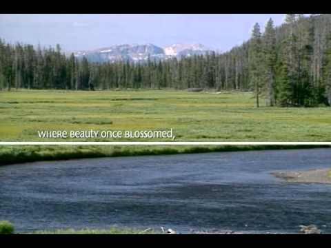 The Rebirth of Yellowstone