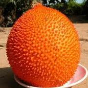 Unusual Fruit