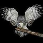 william greyowl snodgrass
