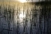 Experience the Ballona Wetlands