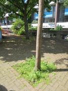 Golden Lane Estate Tree Pits