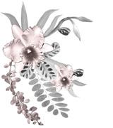 orquidea branco e preto