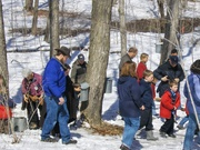 Tap Your Trees--Backyard Maple Sugaring
