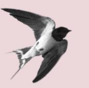The Swallowsnest Portrait Sessions