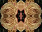 Roses of Gold