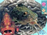 Fish on the Brain