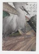 Egret collage -for PG