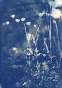 Buttercups in Blue