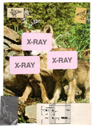X-Ray Wolves!