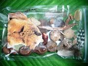 Squirrel box 1/2