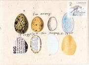 Eggs - Mail Art Call