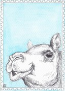Out: Dromedary to the Canarias