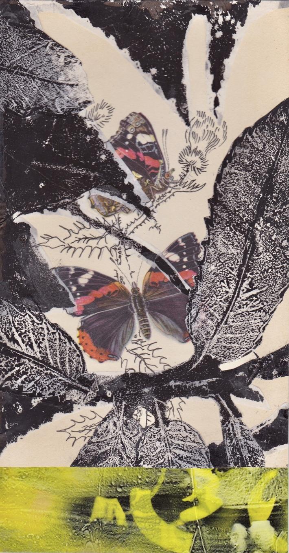 butterflies_15da