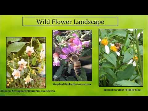 PBC Beekeepers present Melissa & Richard McGaughey-Moyroud Bee-Friendly Landscapes