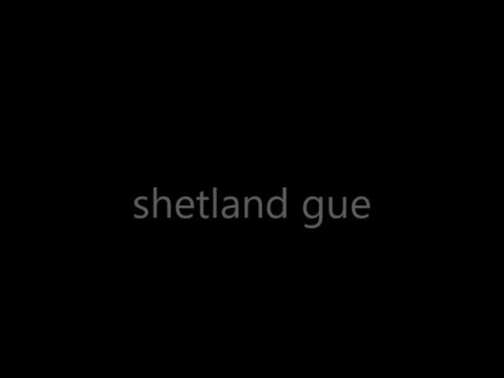 shetland gue