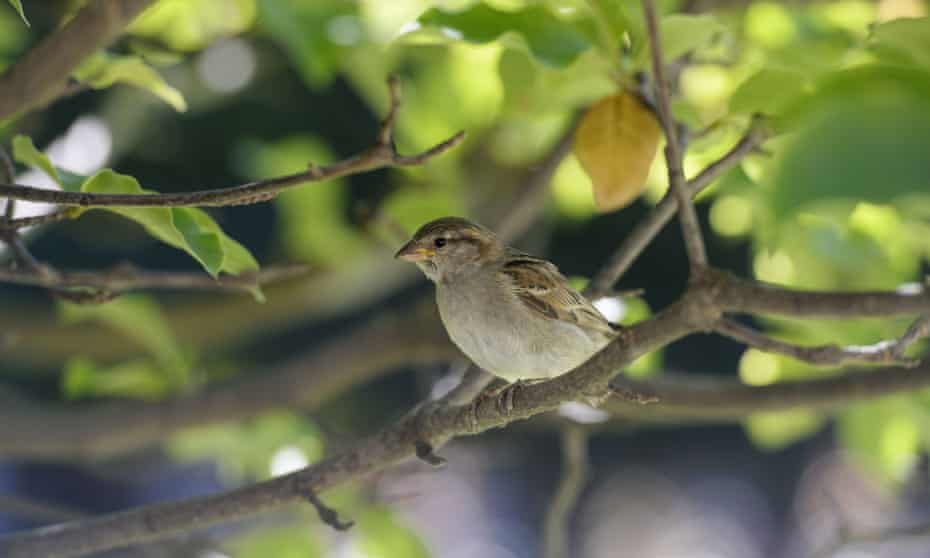 The Guardian: 'Catastrophe' as France's bird population collapses due to pesticides