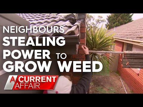 Man discovers he's powering neighbour's weed operation | A Current Affair