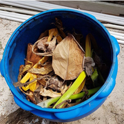 Tobacco Caye Marine Station Composting -Belize