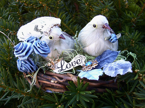 Bluebirds In Love