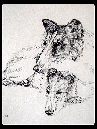Vintage Collie Dogs Pen and Ink Drawing