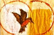 bird33
