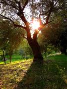 L'albero dell'esistenza
