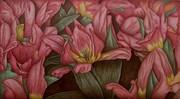 tulip rapsody