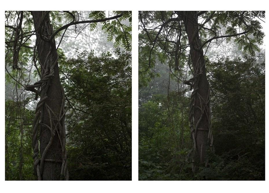The Tree Alone (Vine)