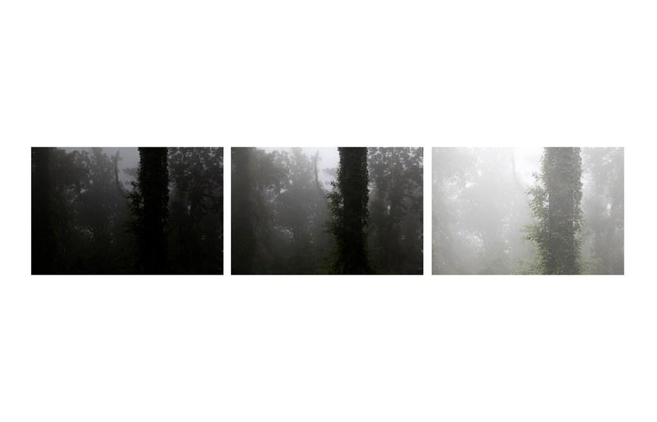 The Tree Alone (Black Ivy)