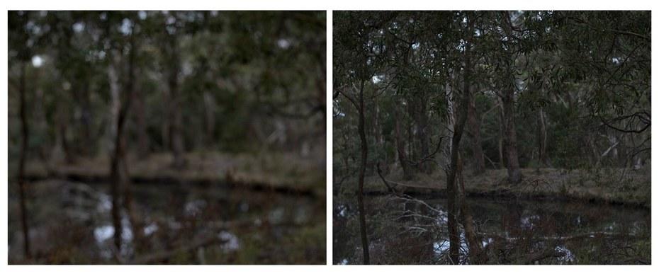 Goldfield Study, Mt. Alexander (Tree and Pond)
