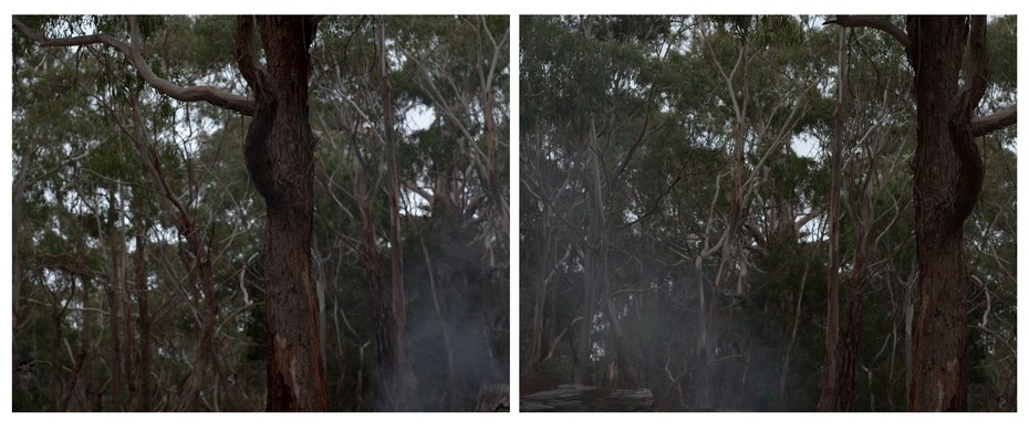 Goldfield Study, Mt. Alexander (Gum Tree and Smoke)