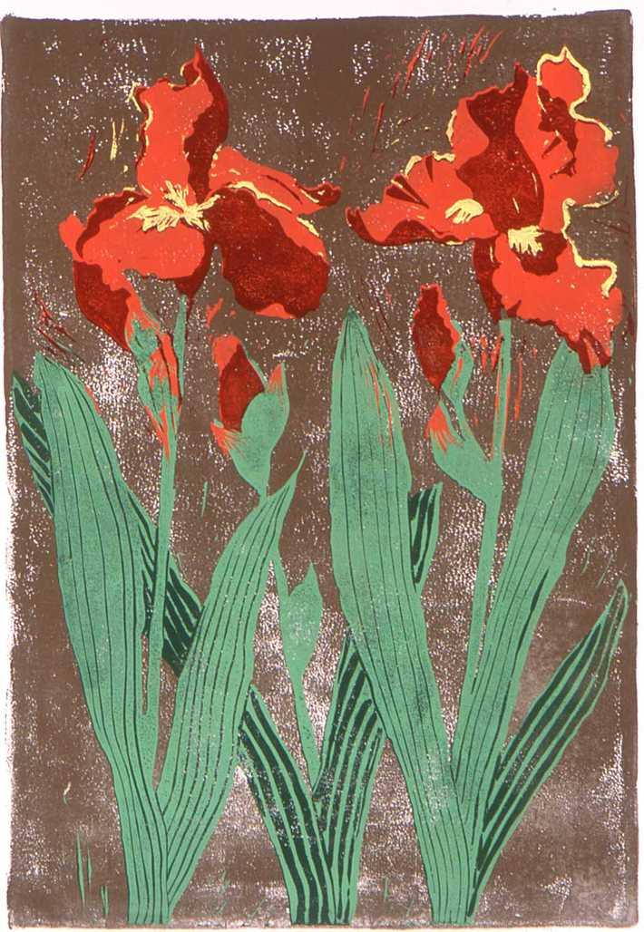 Blood Red Iris