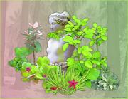 Succulent Garden 2012