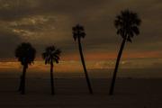 4 Palms Tampa