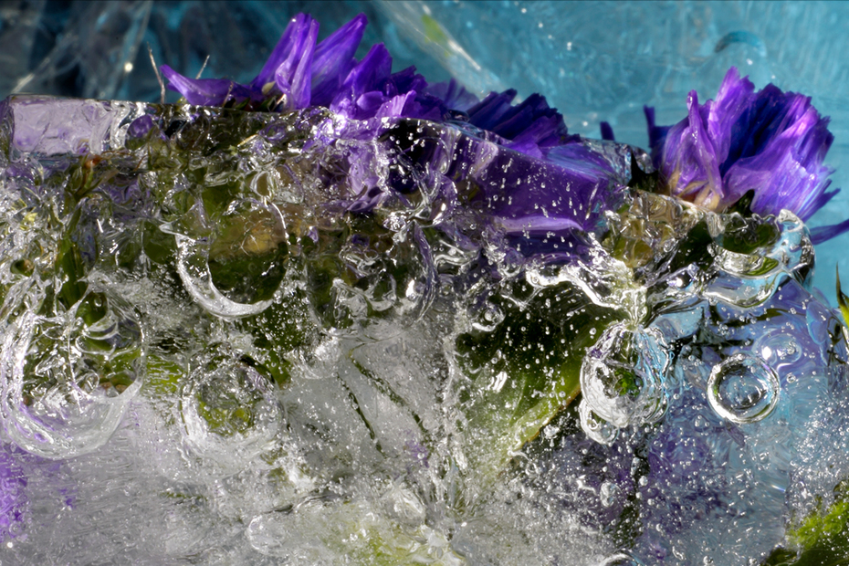 Flowers and Ice (5317v2)