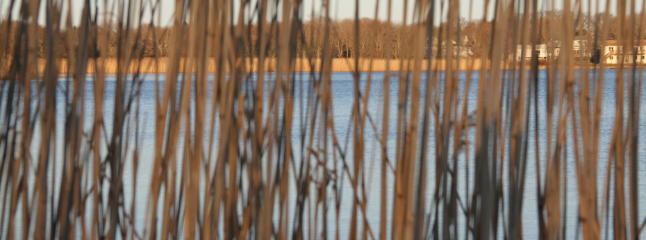 02 26 12-A View Through Tall Grass