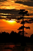 Cypress Skies