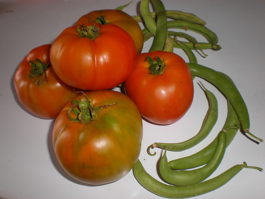 First Tomatoes