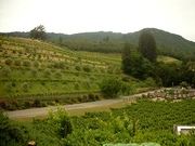 Benziger Biodynamic Vineyard and Farm