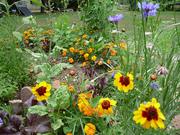 zen wildflowers