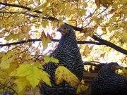 Birds in fall.