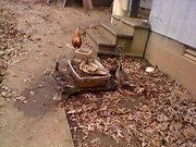 Nov. 22nd Three ducks watching Pablo