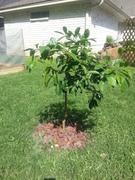 Update # 3: Spring Organic Garden 2014