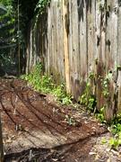 Update # 2: Spring Organic Garden 2014